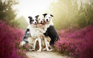 Если у Вас в квартире живут сразу два любимца, или у Ваших друзей или знакомых есть такие же любимые собаки или кошки, то эта акция для Вас!